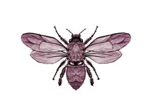 CofA Bee